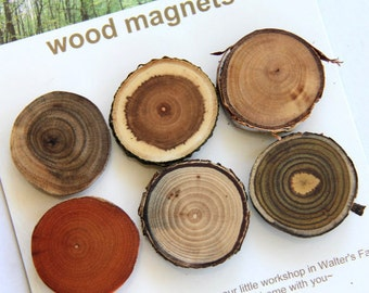 6 wood magnets - bold mix - butternut, apple, birch, buckthorn, elm and sumac - for home or office