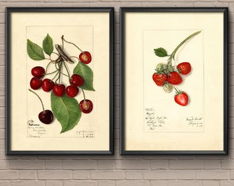 Botanical Print Set, 1882, cherry print, botanical art, vintage botanical, cherry poster, botanical poster, botanical prints, cherry art