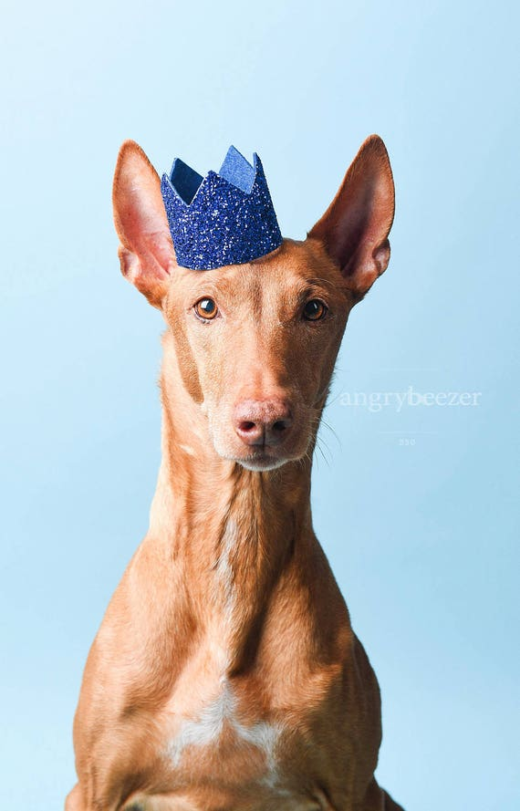 Pet Birthday Party || Animal Party Hat || Cat Kitty Puppy Pig Birthday Crown Hat || Pet Birthday Crown || Pet Portrait