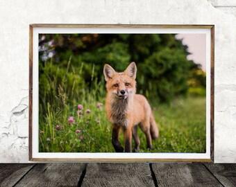 Orange Fox, Meadows, Greenery,Summer, Animal Print, Fox Print, Digital Wall Art, Print, Photo, Woodland Animal, Fox Decor, Woodland Creature