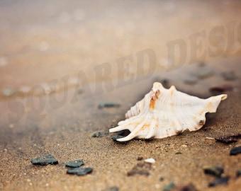Sea Shell Digital Photo For Prints, Instant Download Seashell Wall Art, Bedroom Decor, Office Decor, Sea Shell Art Photography, ScreenSaver