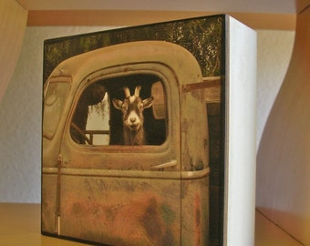 Truck Driver Goat, Photo on 4x4 wood block