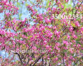 Flower photo, Flowering Trees, Flower Photography,  instagram photo, spring photo, stock photo, digital photo, pink photo