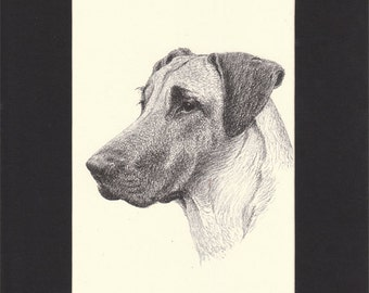 Great Dane Vintage Dog Print C.Francis Wardle 1935 Drawing Mounted with Mat Great Dane Print Great Dane Dog