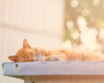 Cat Photography - Animal Photo - Dreamy Photo - Kitten Photo - Sleeping Cat - Tabby Print -  8x10 8x8 10x10 11x14 12x12 16x20 - Photography