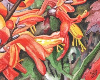 Orange Crocosmia × Crocosmiiflora, ORIGINAL watercolor painting, FREE shipping