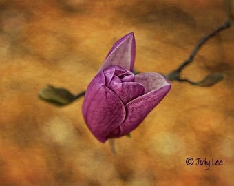Flower Photography, Tulip, Tulip Tree blossom, Pink blossom, Wall Art, Nature Photography, Home Decor, Pink Gold