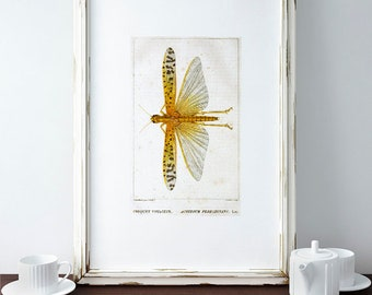 dragonfly printable, Dragonfly wall art, dragonfly, dragonfly decor, dragonfly print, dragonfly art ,vintage print,antique dragonfly,vintage