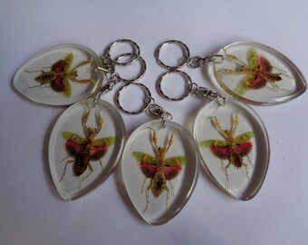 Real 5 pcs Creobroter gemmatus keychain encased in clear resin
