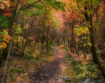 Fall Mountain Foliage, Fall Colors, Fall Photography, Wall Print, Home Decor, Office Decor, Road Less Travelled, Fall Hiking Trail, Wasatch