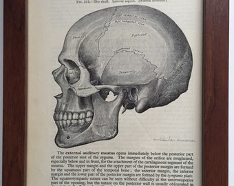 Antique Anatomical Skull Vintage Lithograph, print from 1942 Gray's Anatomy, framed art