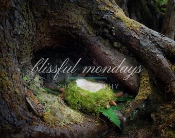 Moss Nest in Tree