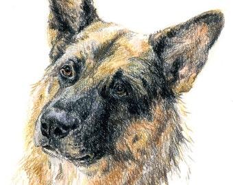Sketch-portrait of your dog (A4 size)/Portrait-croquis de votre chien (A4)