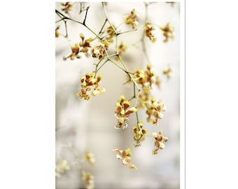 Orchid Flower Photography Floral Art Print Yellow Grey Gray Decor