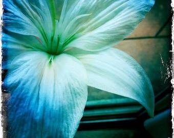 Blue Lily Fine Art Photograph by DENISE SLOAN