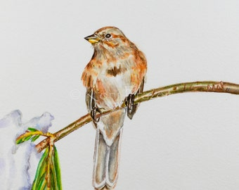 American tree sparrow watercolor painting, winter bird, wall decor