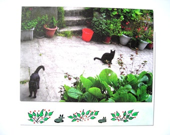 Black cats, postcard of later one of my photos and his(her,its) decorated envelope.