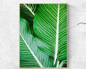 Leaf print, Tropical print, Large wall art prints, Printable wall art, Digital download art, Leaf poster print, Botanical print, Nature art