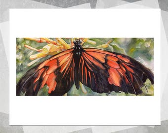 Tattered Butterfly Giclee Print - Realistic Watercolor Butterfly, Butterfly Painting, Wildlife Painting, Realistic Painting, Gift