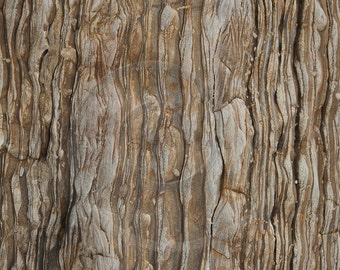 Dark Tree Bark Photography Background Instant Download Printable Digital Scrapbook Paper Royalty Free Stock Photo Texture Overlay Photoshop