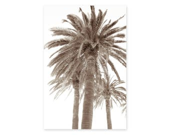 Palm Tree Photography Print - Sepia Wall Art - California Palm Tree Poster