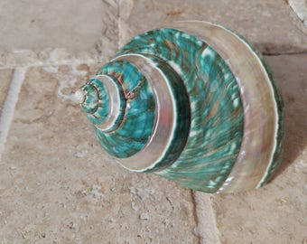 Turbo Shell -  Jade Turbo Shell - Natural Turbo - Polished Jade Seashell - Polished Jade Turbo - Pearlized Shell - No. 202
