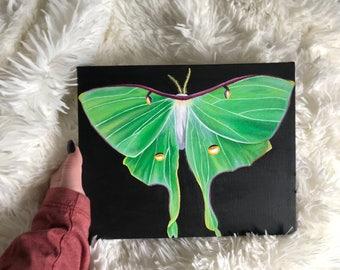 Luna Moth Acrylic Painting