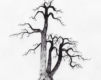 Original Pencil Sketch of Tree part of a large art series, Tree Drawing, Wall Art. Home Decor, Framed and Matted. Owentree Studios