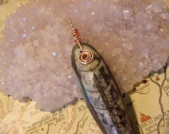Fossil Orthoceras Pendant Copper Wire Wrapped  (11L148)