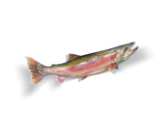 Steelhead Decal, Steelhead Sticker, Steelhead Trout