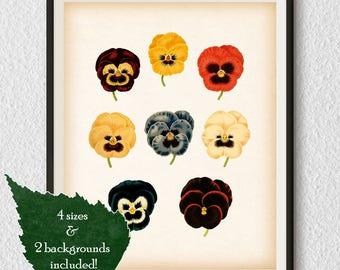 Pansy print, Vintage flower print, Botanical flower print, Botanical art, Illustration, Pansy art, Instant download 8x10, 11x14, A3, A4, #88