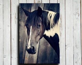 Black and White Paint - Horse decor - Animal photography - Horse photography - Horse art - Black and white horse - Equine decor - Canvas