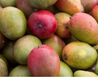 Photo Print - Food Photos, Mangos, Kitchen Photos, Fruit Photos