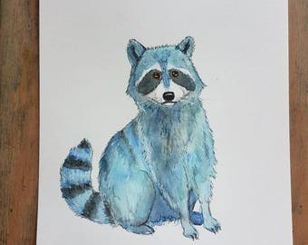 Blue racoon