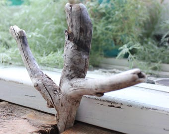 Unique Driftwood Piece for Beach Art , Jewelry Display and Coastal Home Decorating , Nature Made Drift Wood