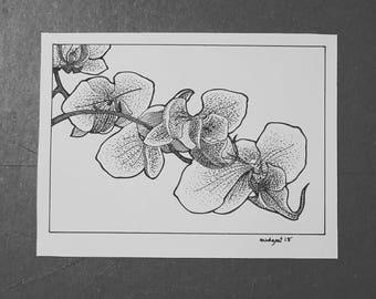 Art, orchid