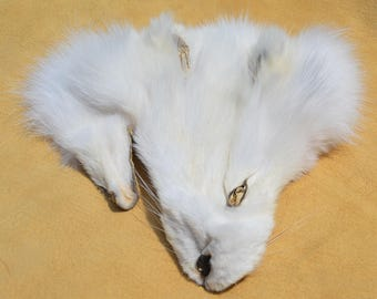 Tanned Arctic Fox Face - Salvaged Fur
