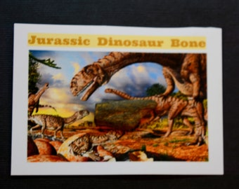 Dinosaur Bone Fossil *** Great Collector's Piece for Youth **** ETD005