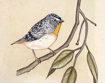 Forty Spotted Pardalote Bird A5 Print, Bird Artwork, Bird Watercolour Painting, Art Print, Wall Art, Wall Decor, Australian Bird Print, Bird