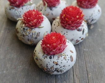 25 seed bombs red gomphrena, wild flower seed, save the bees,   wedding favour, thank you, baby shower