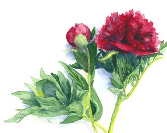 Impression de pivoines rouge aquarelle 8 x 10, Art Floral, Art Nature, sticker, Home décoration, papier Aquarelle, aquarelle fleurs, Art botanique