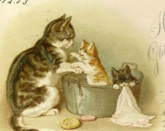 Herzlichen Glückwunsch zum Neuen Jahre Mother Cat and Kittens German Antique New Year's Postcard 1904 Wezel and Naumann