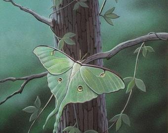 Luna Moth Print, Insects, Moth Print, Acrylic, Art Print, Home Decor, Wall Decor, Office Decor, Gifts, Bedroom Decor, Moon Moth,Entomologist
