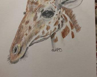 Girafe au crayon de couleur