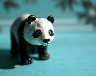 Panda - Photograph - Various Sizes
