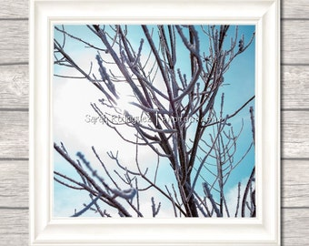 Sun Burst Tree PRINT - Wall Art - blue sky photo - nature home decor