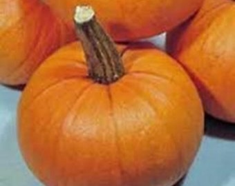New England Sugar Pie  Pumpkin Heirloom Garden Seed Non-GMO 15+ Seeds Naturally Grown Open Pollinated Gardening