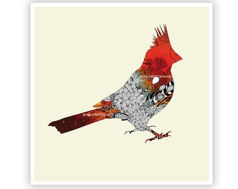 Cardinal by Iveta Abolina -  Floral Illustration Print