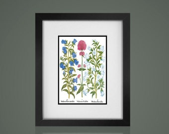 BOTANICAL PRINT - Matted And Framed botanical Print, Free Shipping, Gallery Wall Art, Framed Antique Print, Black Or  White Frames