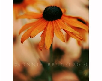 Vibrant Orange Coneflower fine art print, colorful summer wall decor, interior art, floral wall art home or office